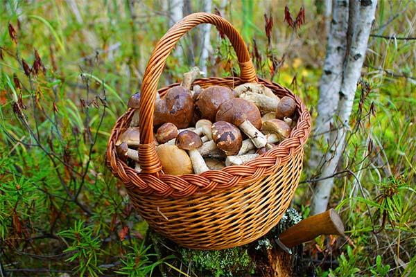 Сонник корзина с грибами