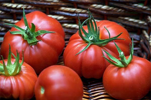 Сонник крупные помидоры
