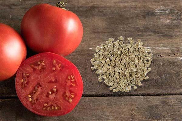 Сонник семена помидоров