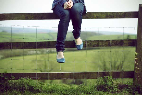 Сонник сидеть на заборе