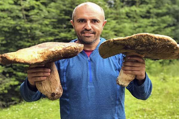 Сонник собирать большие грибы в лесу