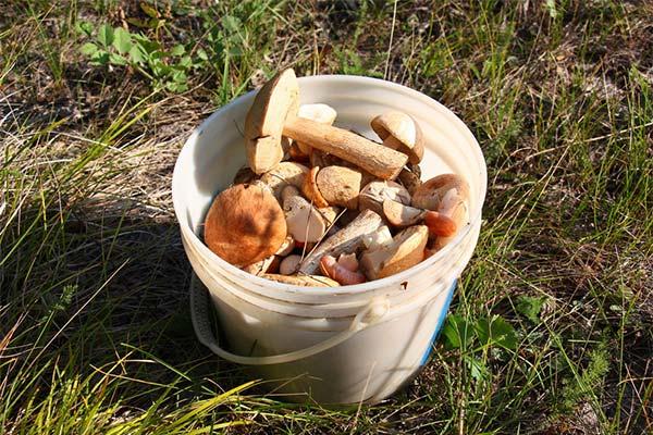 Сонник ведро грибов