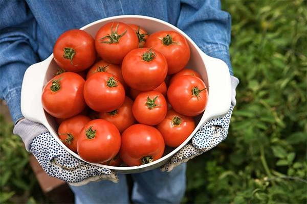 Сонник ведро помидор