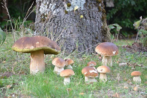 Сонник видеть, как грибы растут