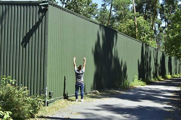 Сонник высокий забор