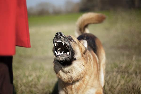 Сонник драться с собакой