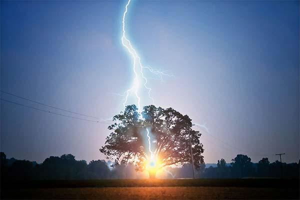 Сонник молния ударила в дерево