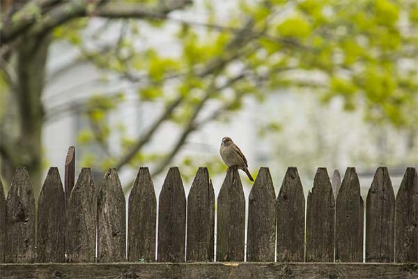 Сонник стоять на заборе