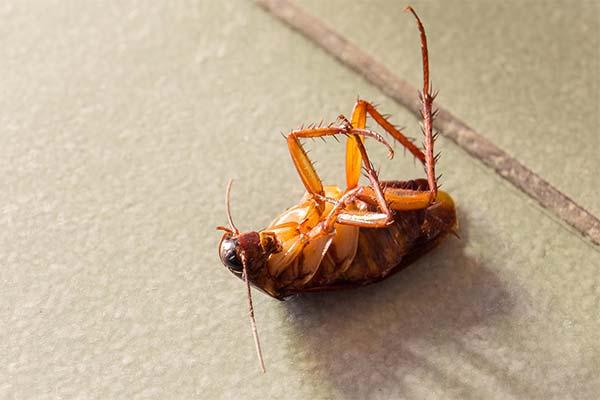 Сонник бить тараканов