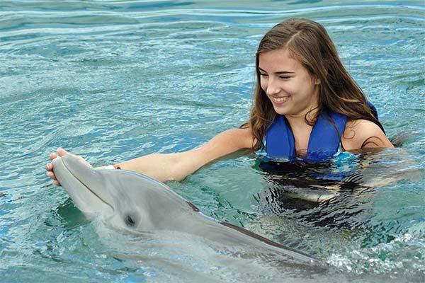 Сонник гладить дельфина