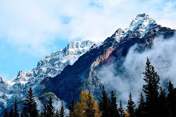 Сонник горы