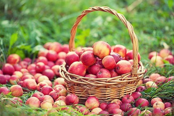 Сонник корзина с яблоками